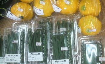 福留野菜.jpg