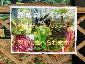 野菜のプランター1.jpg